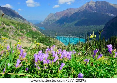 wild flowers on the trail to Grinnell Glacier and lake in Glacier National Park in summer - stock photo
