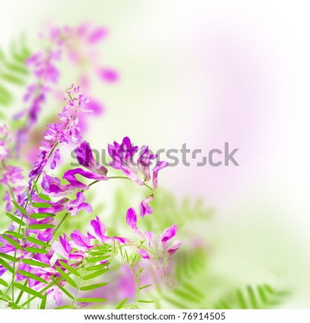 wild flowers pink blooming on white background - stock photo