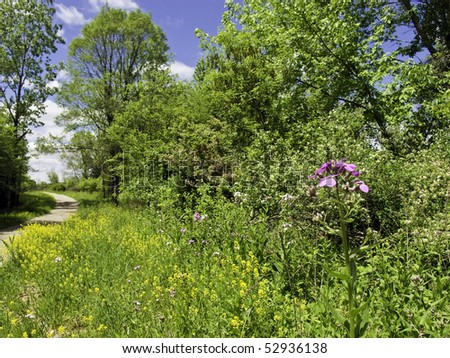 Wild flowowers growing along a hiking trail on a sunny day - stock photo
