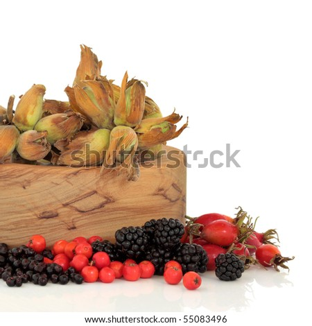 Wild food of autumn of rose hip, elderberry, blackberry and rowan berry with fresh hazelnuts in an olive wood bowl, isolated over white background. - stock photo
