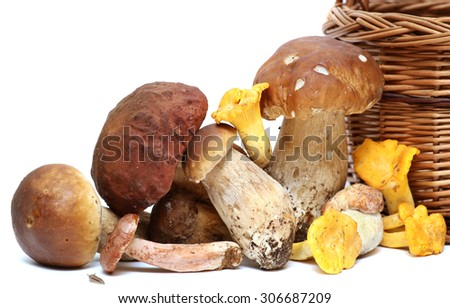 Wild Foraged Mushroom selection isolated on white background, with shadow. Boletus Edulis mushrooms over white background  - stock photo