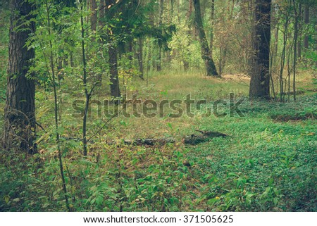 Wild forest, covert. Nature, trees in spring forest. Tinted photo.