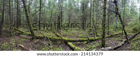 wild forest  fallen tree in the forest. wild forest median strip europe rays of the sun through the trees in the wild forest  - stock photo