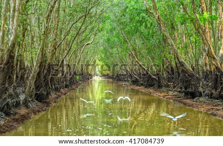 Wild forest road on both sides of mangrove channels with canals lined with birds flying along the canal to create beauty preserved primeval forests and green lungs for man - stock photo