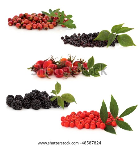 Wild fruit collection of hawthorn, elderberries, rosehips, blackberries and rowan berries, isolated over white background. Top to bottom. - stock photo