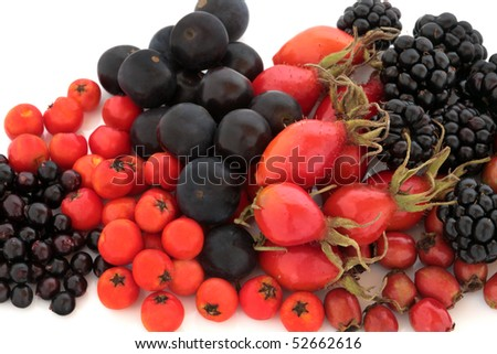Wild fruit of autumn of rose hip, elderberry, rowan, blackberry and blueberry, isolated over white background. High in antioxidants and vitamin c. - stock photo