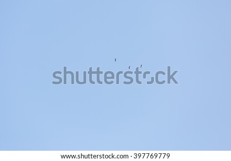Wild goose's flying on blue sky background. Springtime come back - stock photo