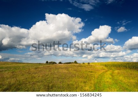 Wild Grass Field in Autumn - stock photo