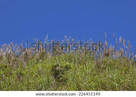 Wild grass on blue sky background - stock photo