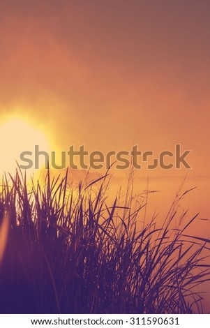 wild grass over big sun sunset background with abstract