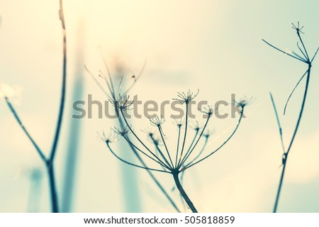Wild grasses against the blue sky at sunset. Macro image