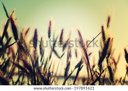 Wild grasses and weeds in a meadow .Instagram Effect - stock photo