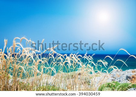 Wild grasses on the sea coast. Beautiful summer landscape - stock photo