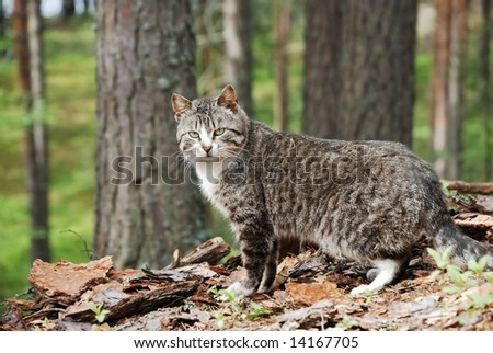 wild gray cat in the forest look at camera