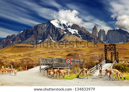 Wild guanacos in Torres del Paine National Park, Patagonia, Chile - stock photo