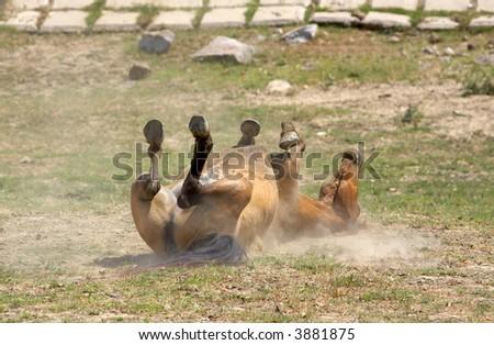 Wild Horse - stock photo