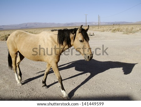 Wild Horse at the Amargosa Junction. Photo taken in Death Valley National Park, California, USA. - stock photo
