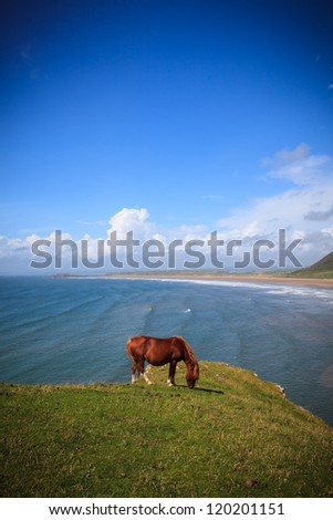 Wild Horse by the Sea - stock photo