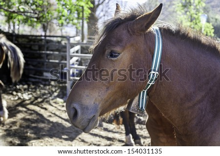 Wild horse, detail of a wild mammal in the wild, animal farm, strength and nature