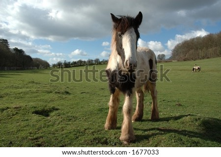 Wild horse in field over dramatic sky