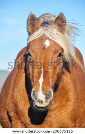 Wild horse in Pyrenees - stock photo