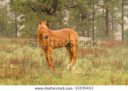 Wild horse in the American West - stock photo