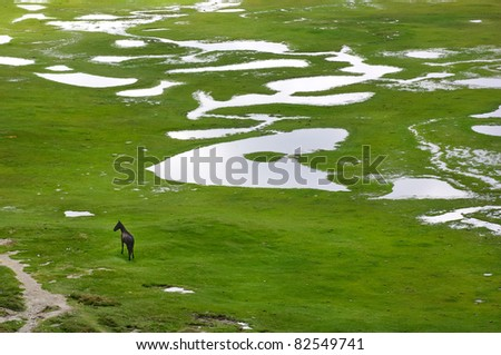 Wild horse in the picturesque valley of lac de Nino, Corsica. Aerial view - stock photo