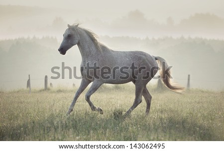 Wild horse in the sunrise - stock photo