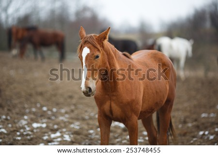 Wild horse on the meadow at winter time - stock photo