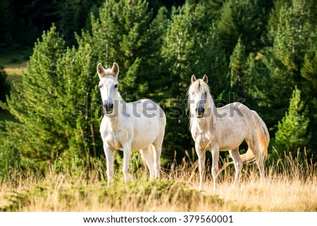 wild horses, animals in nature in the mountains in a clearing in the afternoon. - stock photo