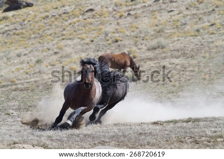 Wild Horses chasing each other
