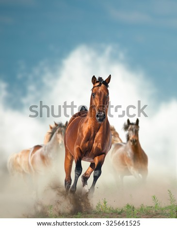 wild horses herd running by the seashore with splashing waves on the background - stock photo