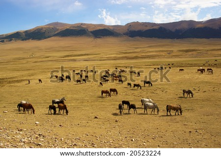 Wild horses in desert mountains - stock photo