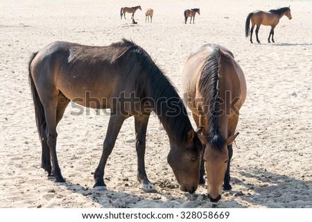Female horse ass - photo#26