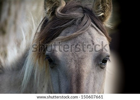 Wild horses in nature reserve - stock photo