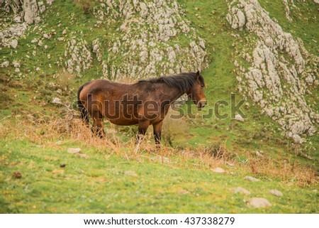 Wild Horses in Nebrodi Park, sicily - stock photo