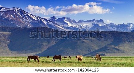 Wild Horses in pasture with Sawtooth Range of Mountains in the background near Bridgeport, California - stock photo
