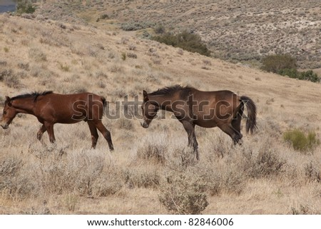 Wild horses in the desert. - stock photo
