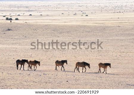 Wild Horses of the Namib on their way to the waterhole at Garub near Aus, Namibia.  - stock photo