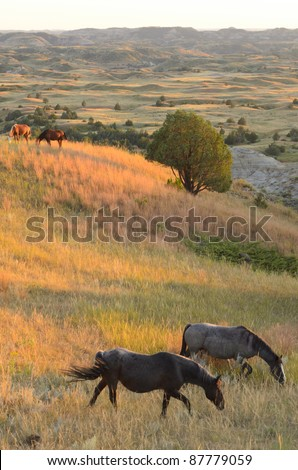 wild horses on grassy hills and badlands - stock photo