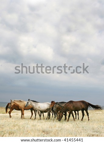 Wild Horses on the Beach. Crimea. Ukraine