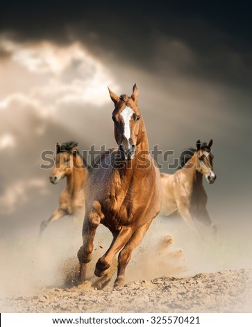 wild horses running wild in dust under ray of light through the storm