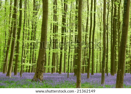 Wild hyacinths in the forest do show a beautiful view. - stock photo