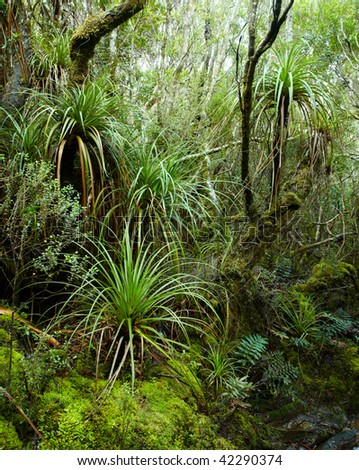 Wild jungle at Tasmania Island - stock photo