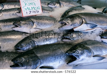 Wild King salmon in Seattle's pike place market