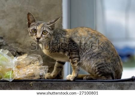 wild kitty in the streets of bangkok - stock photo