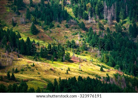 wild landscape slopes of the mountains, alpine species - stock photo