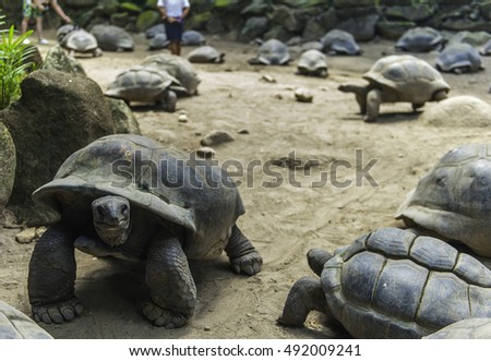 wild large turtles on seychelles