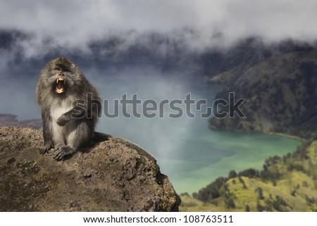 Wild Macaque Monkey on Mount Rinjani, Lombok - stock photo