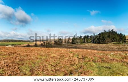 Wild moorland near Princetown on Dartmoor National Park in Devon - stock photo